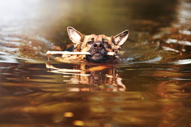 Dogs do love water! But check the water for hidden dangers